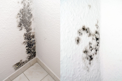 How Can You Tell If Have Mold In Your House